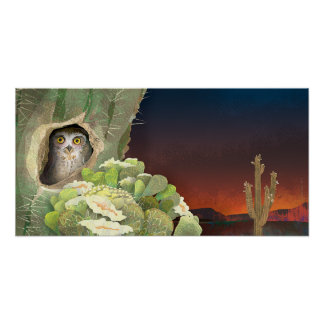 owl in cactus - Poster