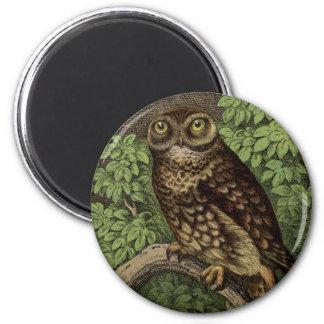 Owl in Leaves Magnet