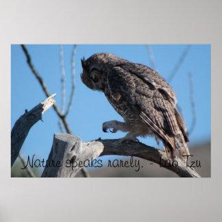 Owl in the Arizona Desert Poster
