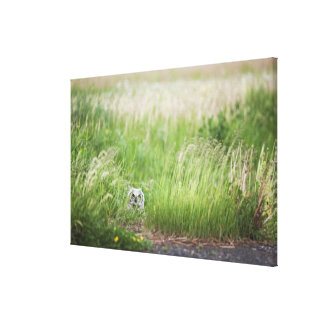 Owl In The Grass Canvas Print