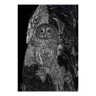 Owl in Tree Bird Nature Drawing Black White Poster