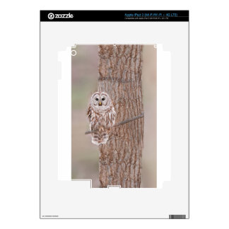 Owl in Tree Nature Bird Add Text Skins For iPad 3