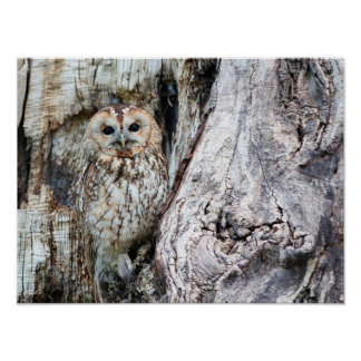 Owl in Tree Poster