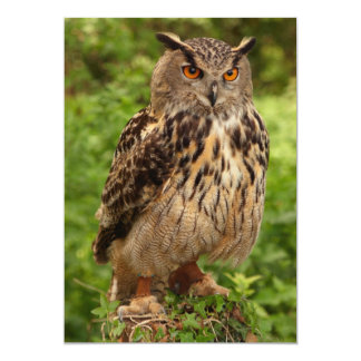 "Owl Invitation 5"" X 7"" Invitation Card"