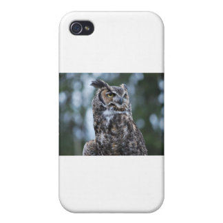Owl iPhone 4 Covers