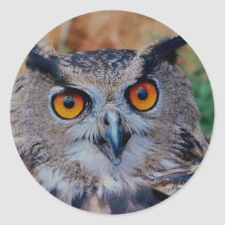 owl is wise classic round sticker