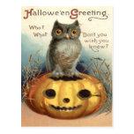 Owl Jack O Lantern Pumpkin Postcard