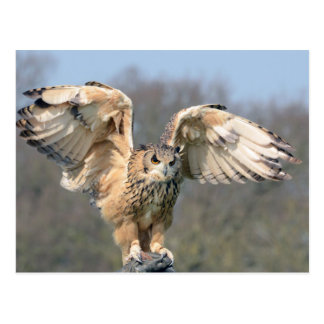 Owl Landing on Hand with Wings Spread Postcard