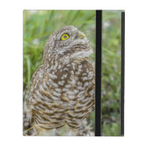 Owl Looking Up iPad Case