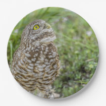 Owl Looking Up Paper Plate