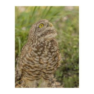 Owl Looking Up Wood Wall Art