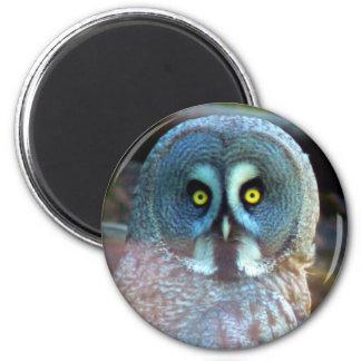 Owl Magnet Refrigerator Magnets