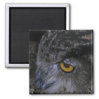 Owl 2 Inch Square Magnet