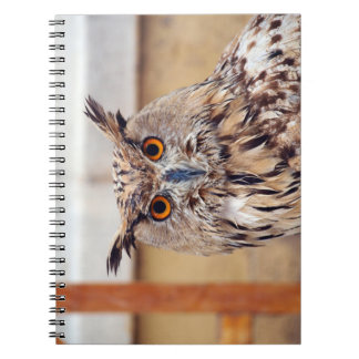 Owl Notebook