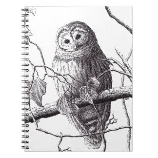 owl on branch pen & ink bird drawing notebook