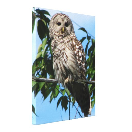 Owl On Wire Canvas Print