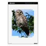 Owl On Wire iPad 3 Skin