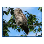 Owl On Wire Post Card