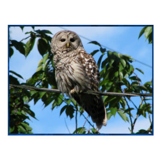 Owl On Wire Postcard
