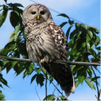 Owl On Wire Statuette