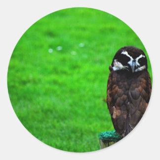 Owl Peering over shoulder Classic Round Sticker