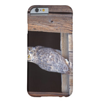Owl perched in a window barely there iPhone 6 case
