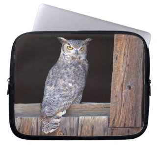 Owl perched in a window computer sleeve
