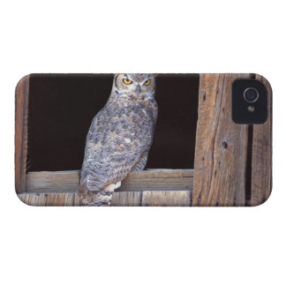 Owl perched in a window iPhone 4 cover