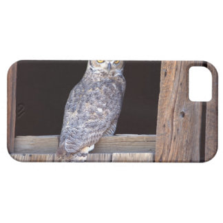 Owl perched in a window iPhone SE/5/5s case
