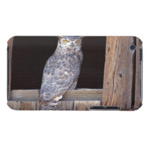 Owl perched in a window iPod touch case