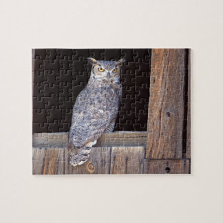 Owl perched in a window jigsaw puzzle