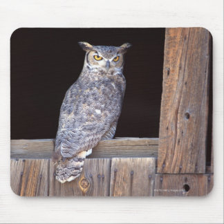 Owl perched in a window mouse pad