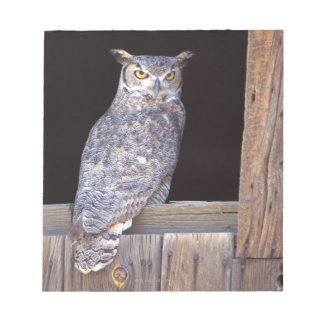 Owl perched in a window notepads