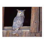 Owl perched in a window post card