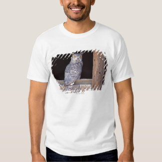 Owl perched in a window t-shirts