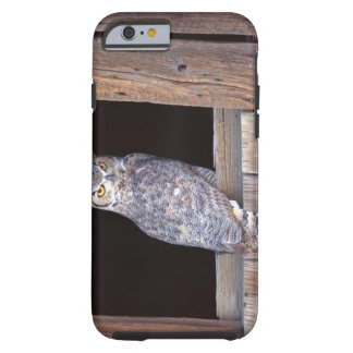 Owl perched in a window tough iPhone 6 case