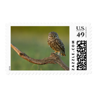 Owl perched on a tree postage