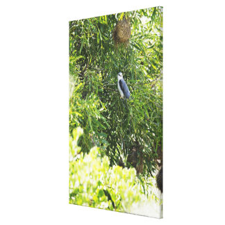 Owl perching on a tree canvas print