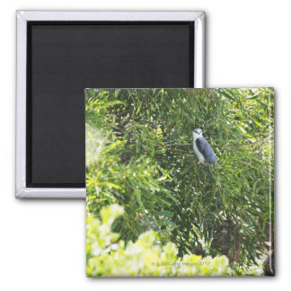 Owl perching on a tree refrigerator magnet
