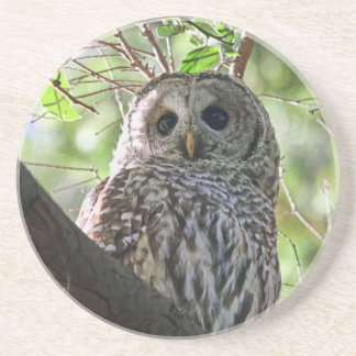 Owl Photo Drink Coasters