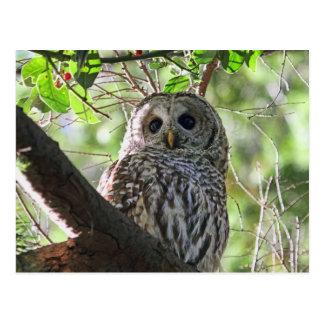 Owl Photo Postcard