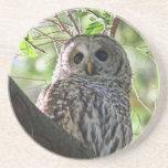 Owl Photo Sandstone Coaster