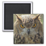 Owl Photo Square Magnet Magnets