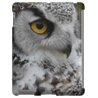 Owl Photograh Close Up