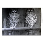 Owl Photograph Greeting Cards