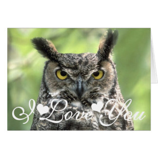 Owl Photograph Image I love you Card