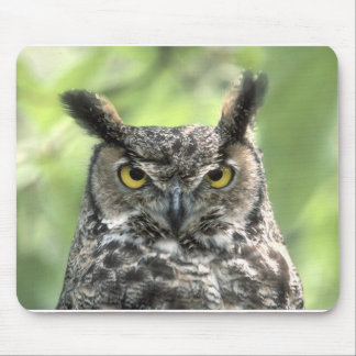 Owl Photograph Mouse Pad