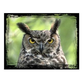 Owl Photograph Postcard