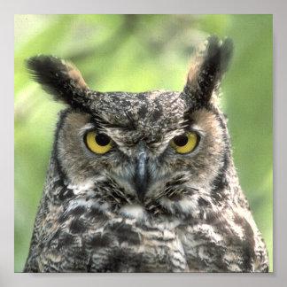 Owl Photograph Poster