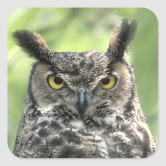 Owl Photograph Square Sticker